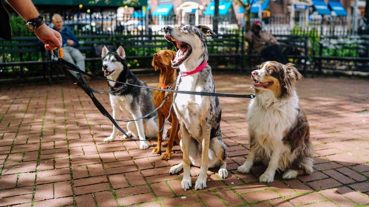 perros paseo cdmx