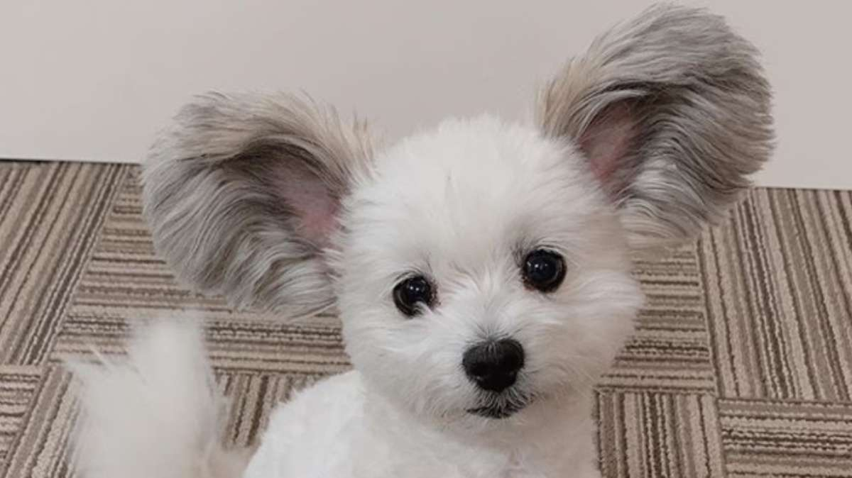 goma-perrito-redes-sociales-instagram