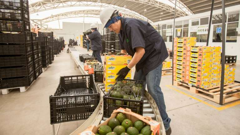 balanza-enero-2020-exportaciones-importanciones-agropecuarias-agroalimentarias