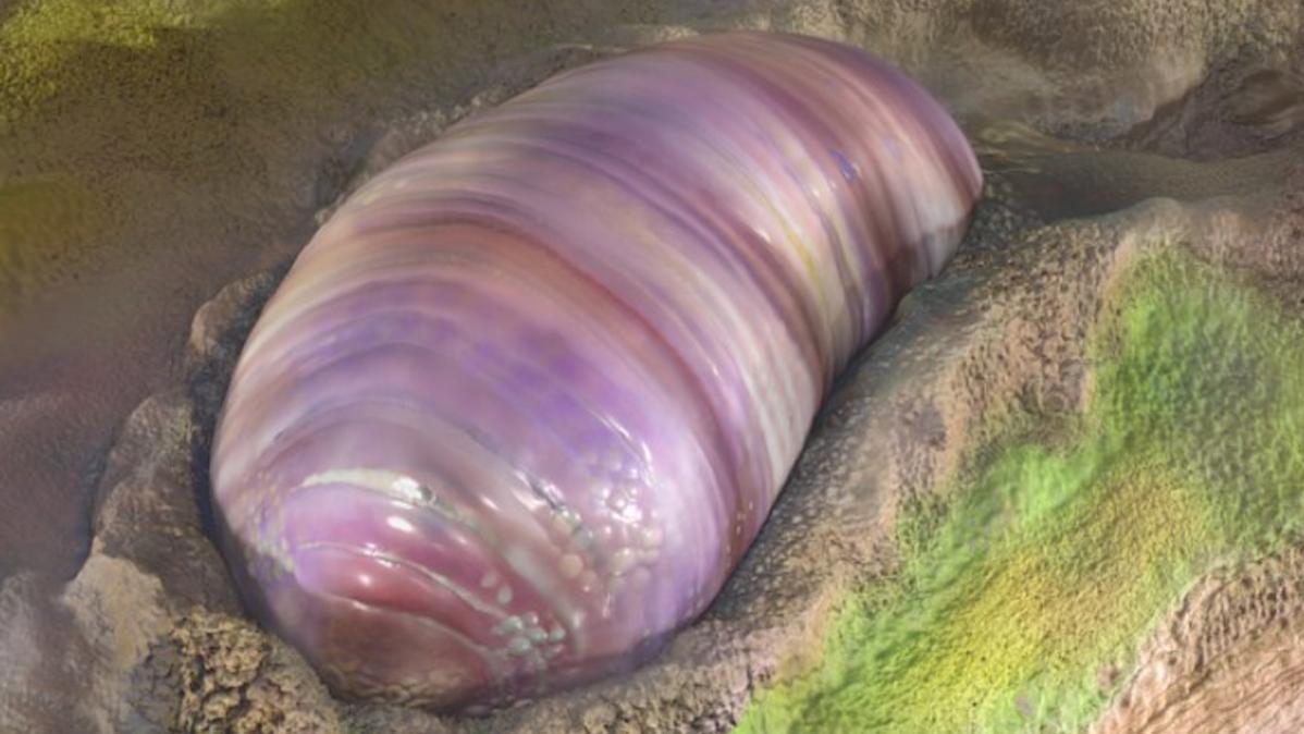 gusano fosil origen animales humano