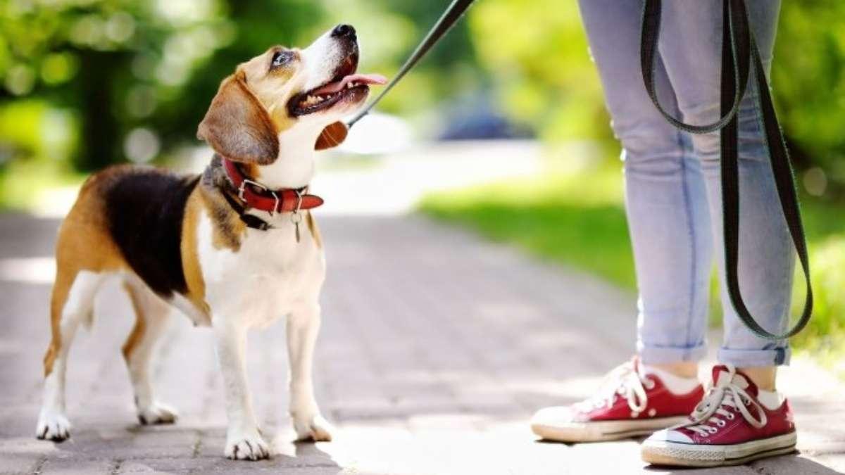 Las mascotas pueden ser susceptibles a enfermedades como la rabia. FOTO: Especial