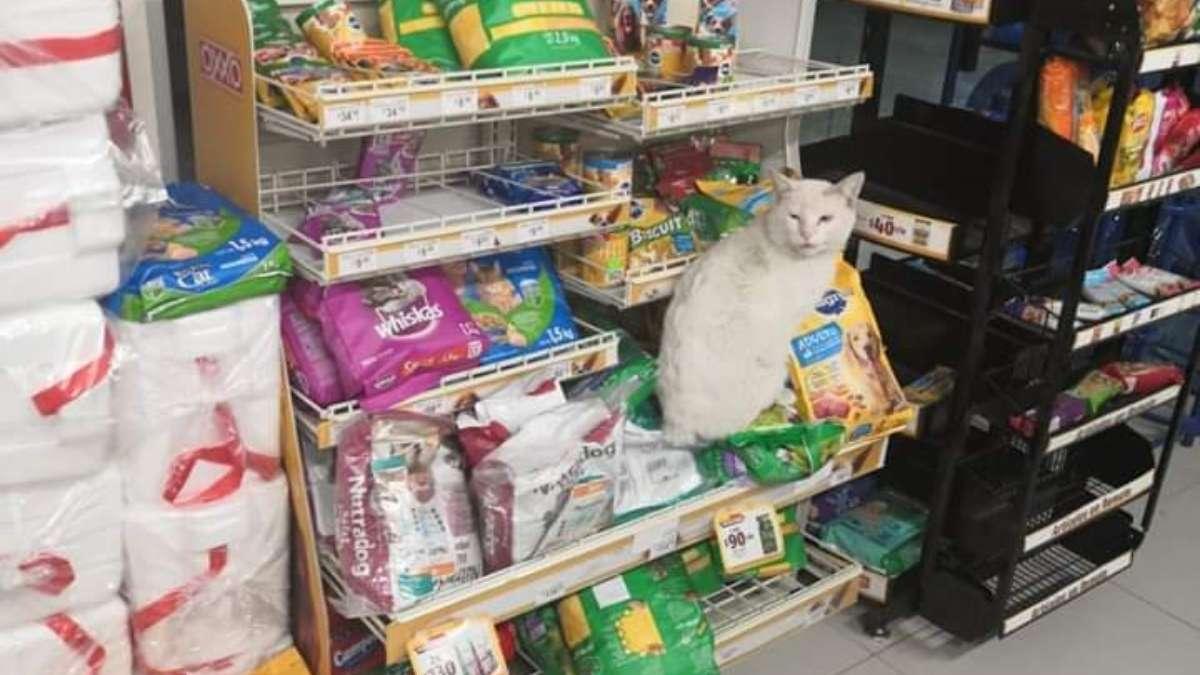 VIDEO VIRAL: Gatito lleva a la gente a la tienda para que le compren comida