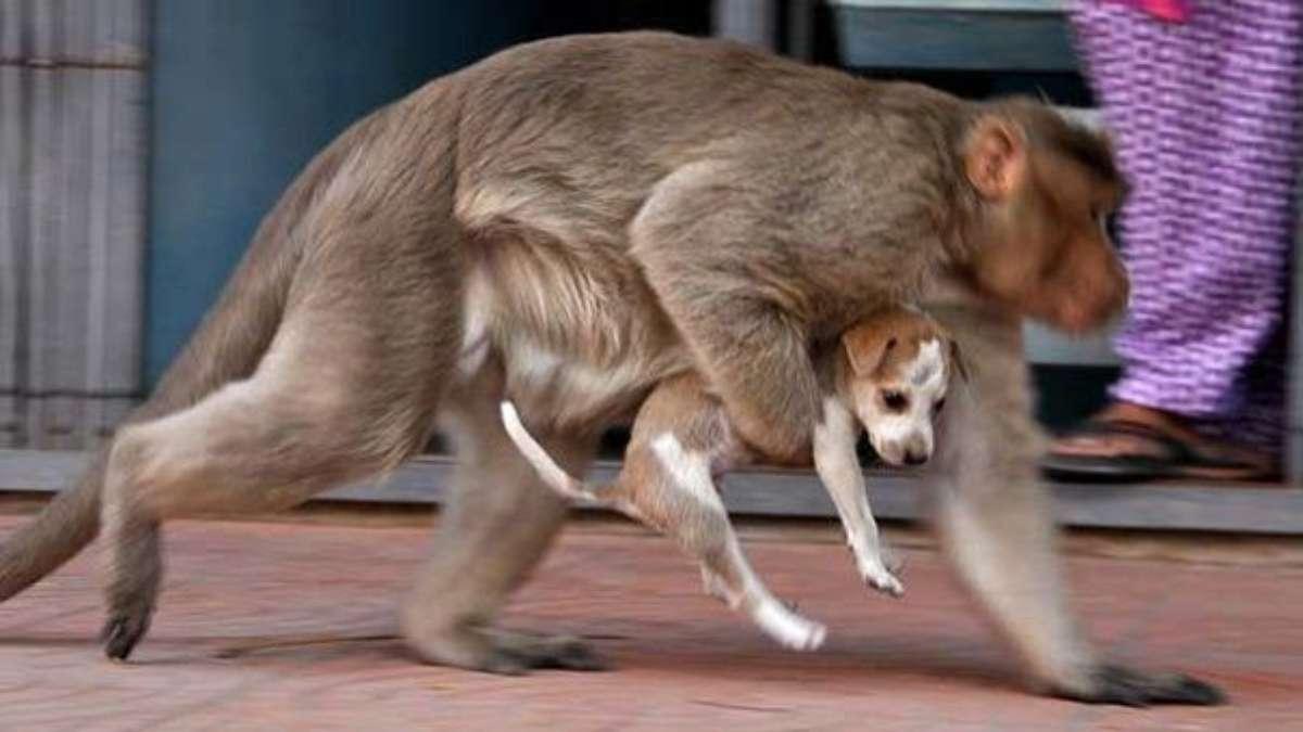 mono y perro