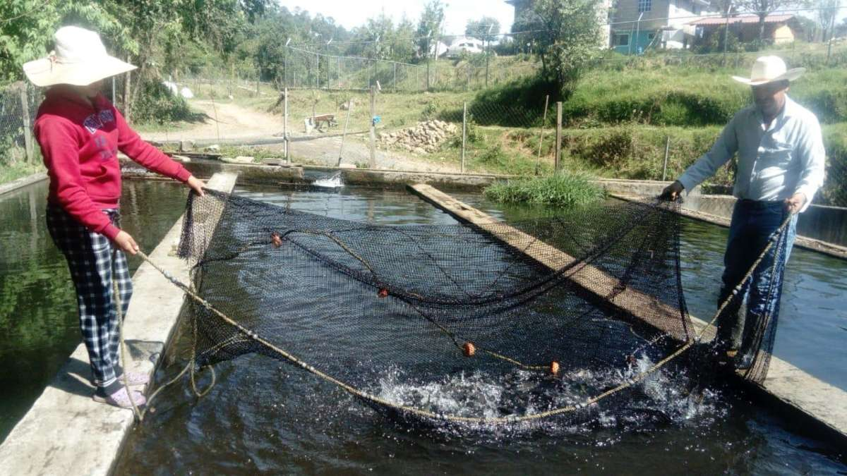 CRISIS. Los acuicultores no cuentan con un sistema para ofrecer el producto en otro lado. Foto: Leticia Ríos