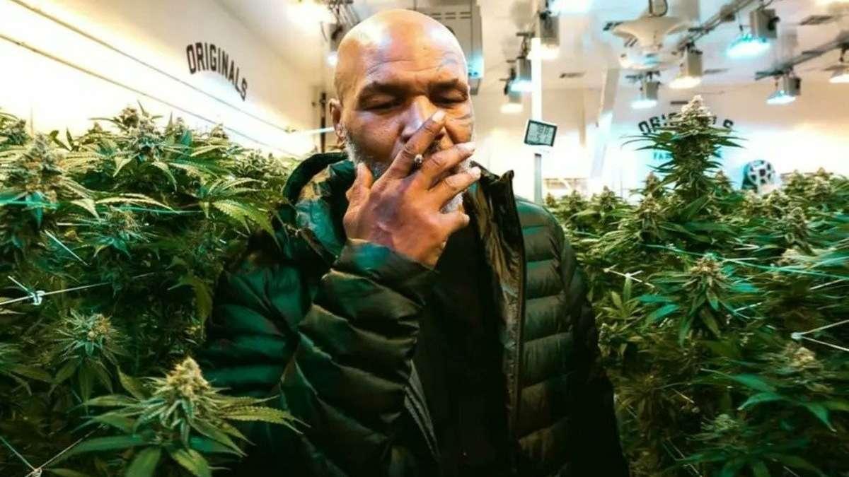 Mike_Tyson_Marihuana_Resort_canabis