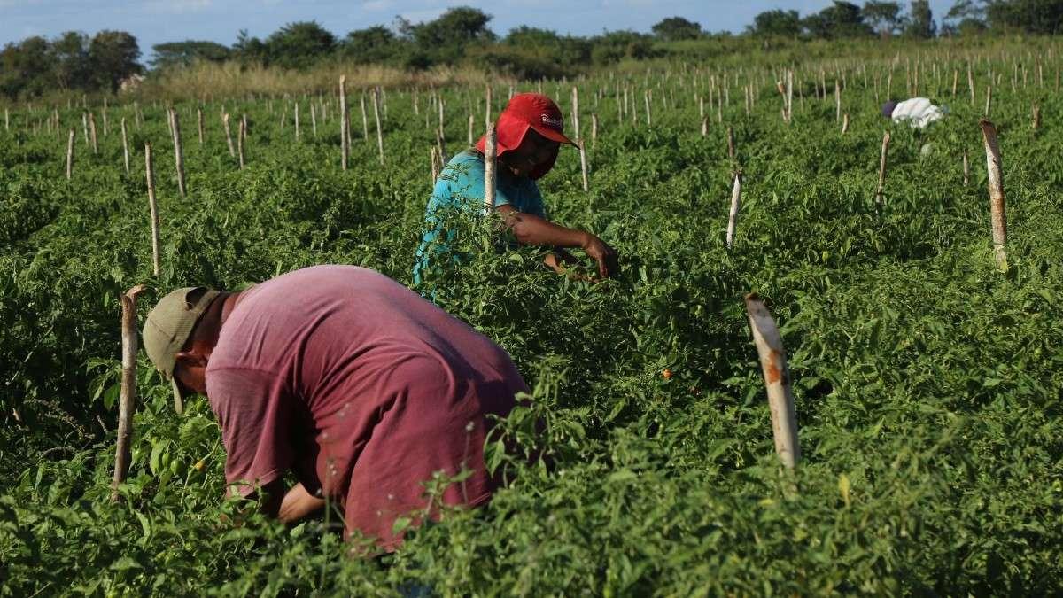 jornaleros-trabajdores-campo-riesgo-contagio-coronavirus-seguridad-social