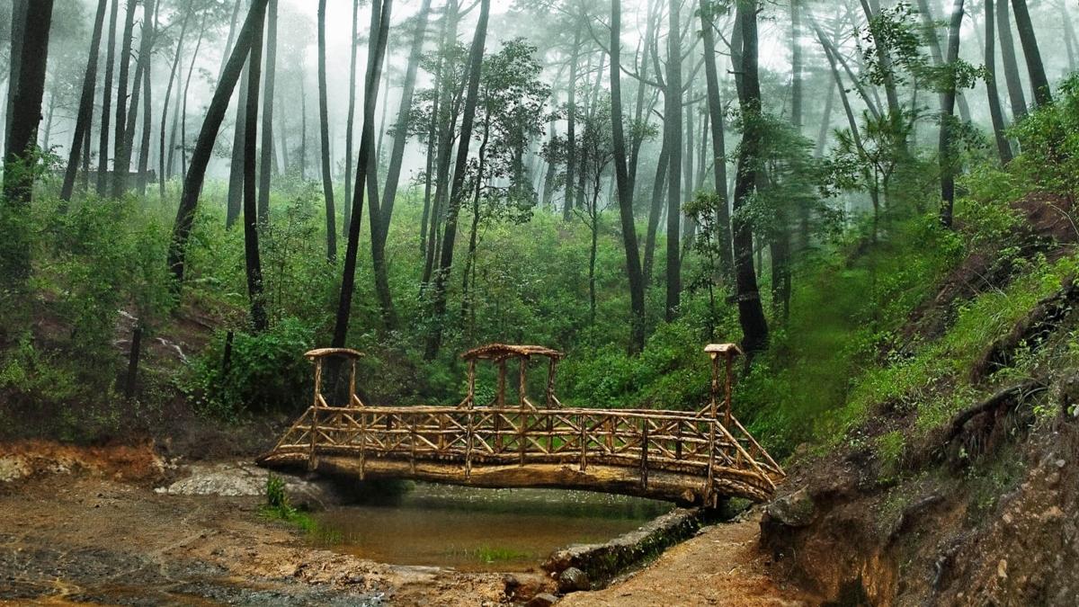 En Mazamitla se encuentra uno de los bosques más bellos de México.