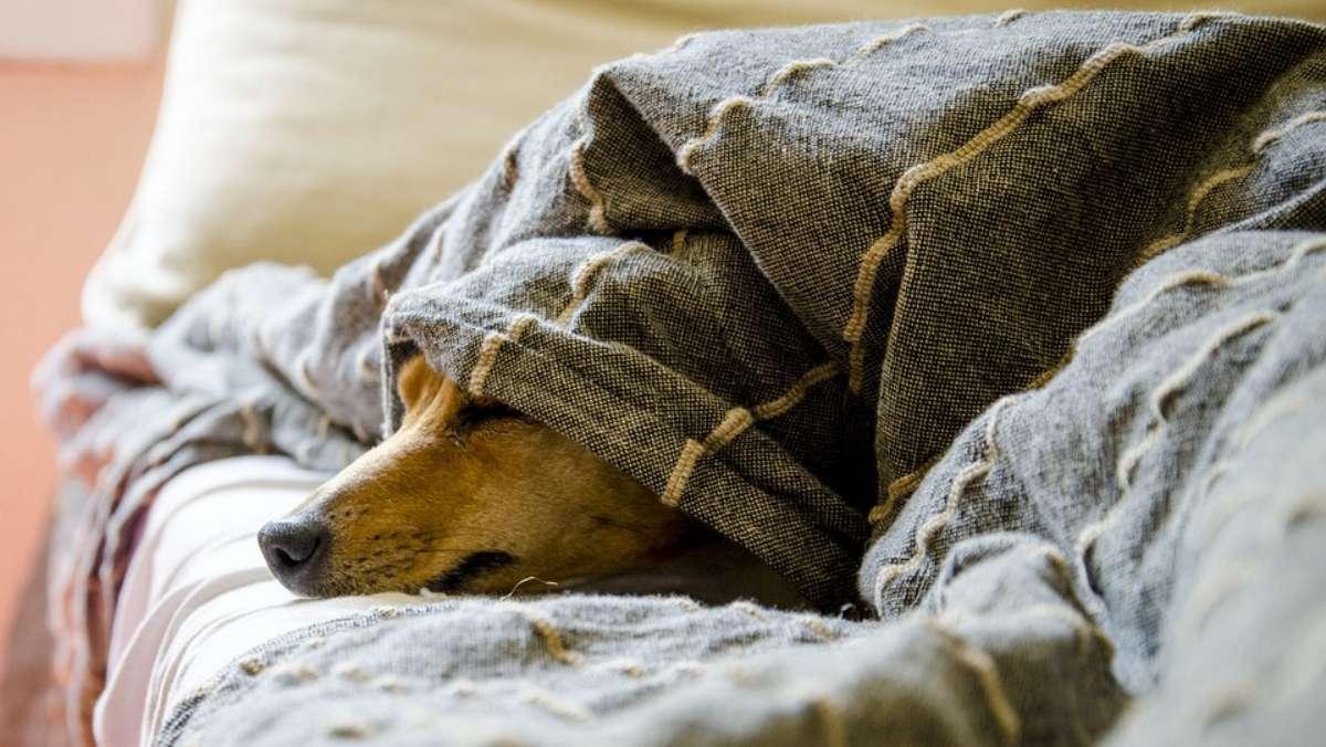 perritos dormir cama