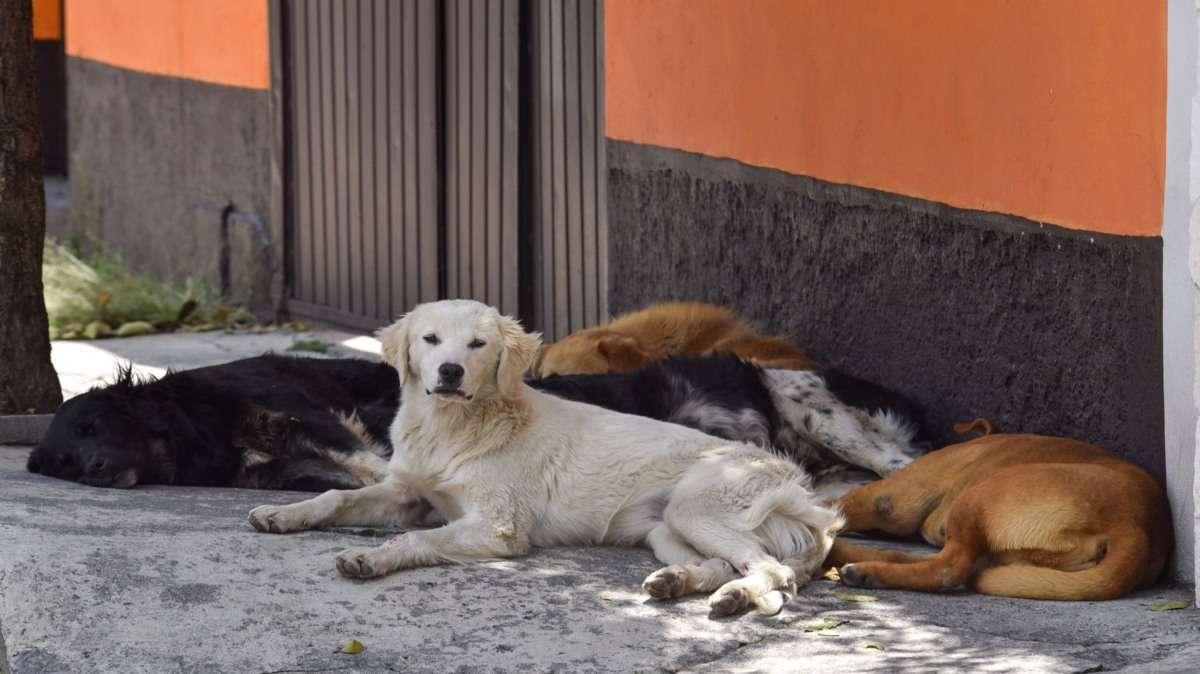 perros violacion yucatan