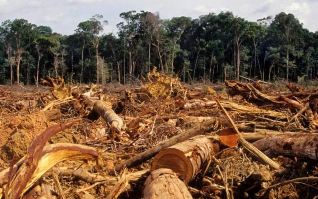deforestacion fin humanidad