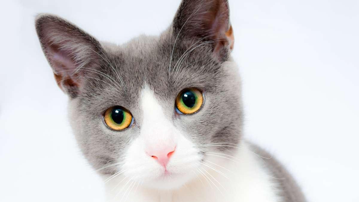 No son nuestras bellas y peludas mascotas felinas todo el tiempo, el instinto animal de caza pueden salir. Foto: PxHere