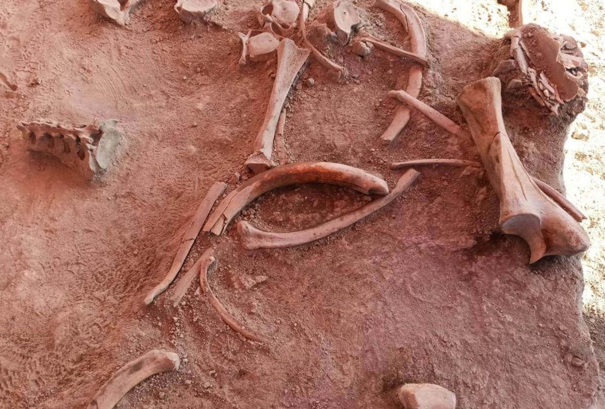 Los restos de mamuts se encuentran en una zona de restricción. FOTO: Cuartoscuro