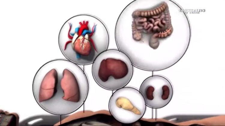 Donación-de-órganos