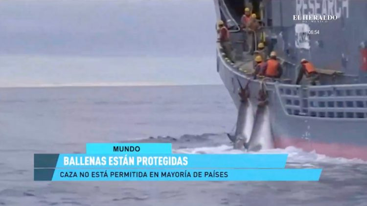 Día Mundial de la Ballena y el Delfín