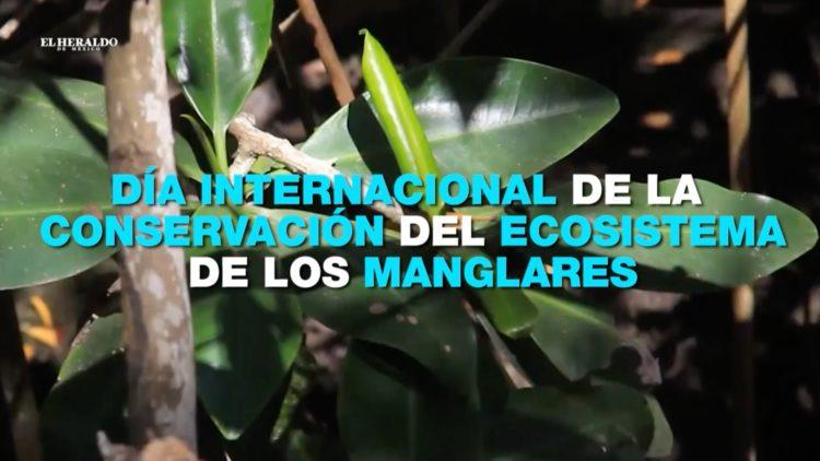 Manglares-El-Heraldo-TV-Noticias-de-la-noche