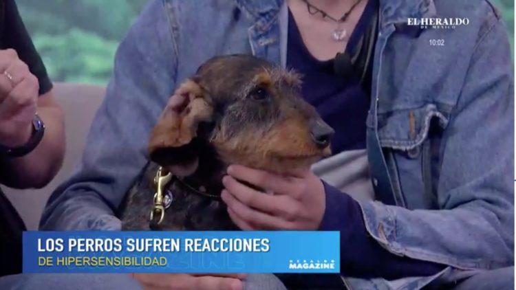 Enfermedades en piel de perros