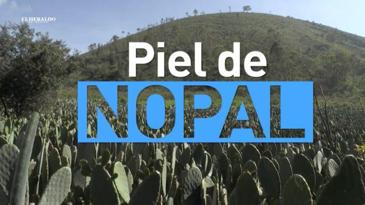 Nopal El Heraldo TV Noticias México