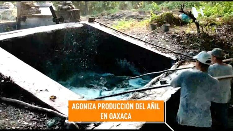 añil-agoniza-produccion-oaxaca-rerportaje-noticias-mexico