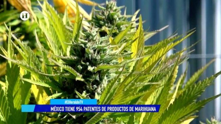 Cannabis El Heraldo TV Guillermo Nieto Anicann