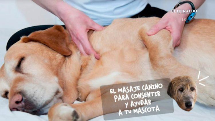 masaje canino