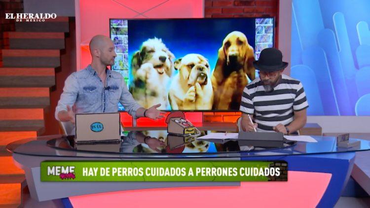 Sacerdote en Brasil da asilo a los perritos en su parroquia