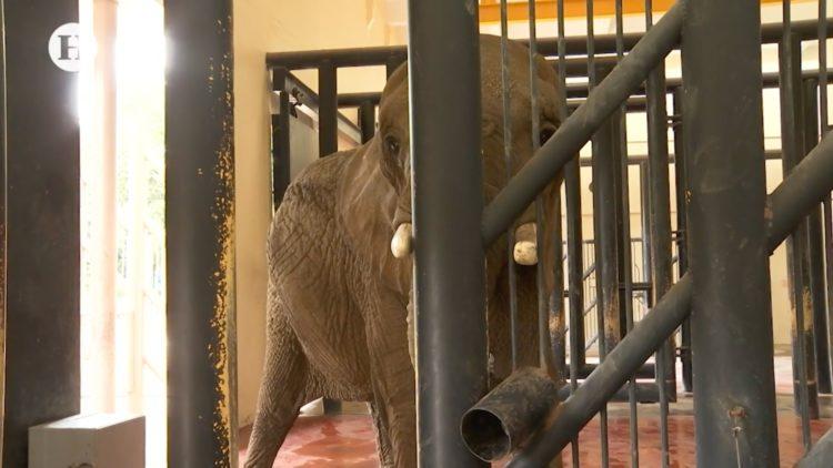 zoologico-san-juan-aragon-maltrata-protege-animales-ambientalistas-denuncian-senado