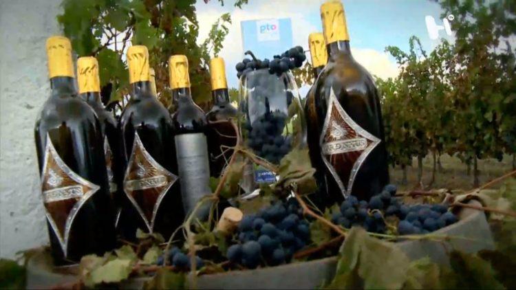 viticultura-guanajuato-cura-hidalgo-turismo-vino-viñedos