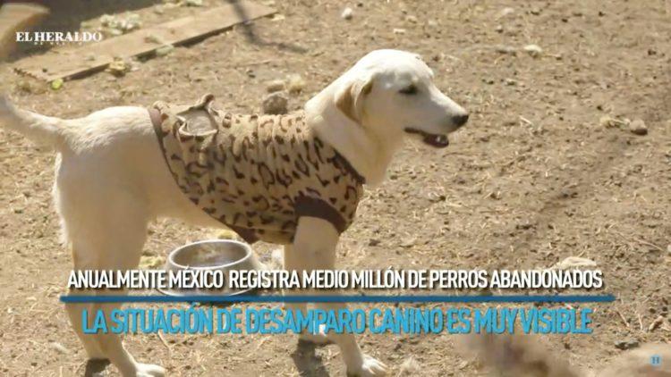 Tras Navidad, 30% de los perros son abandonados; reportaje especial