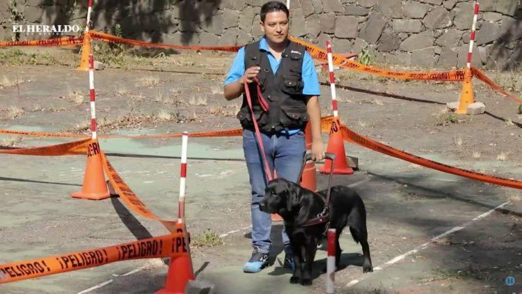 Perros de asistencia, guardianes con arduo trabajo; reportaje especial