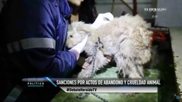 maltrato_animal_castigo_ley_varela_crueldad_animal_veterinarios