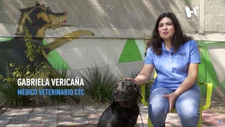 metro_perros_rescatados_estrella_adopcion