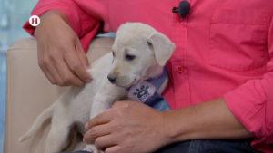 Lo que debes saber antes de adoptar un perrito