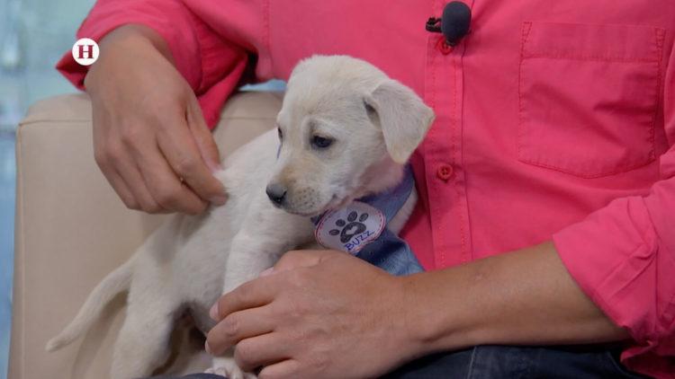 adopcion perritos mascotas nuevas cuidados vacunas Heraldog