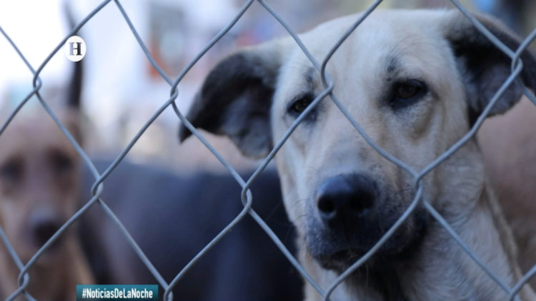 refugio incendio perritos mascotas rescate