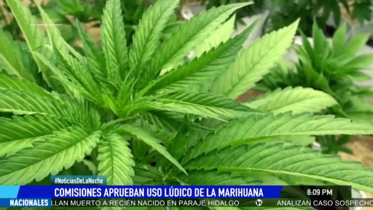cannabis marihuana Senado de la republica aprueban