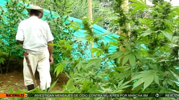 paso_importante_para_legalizar_uso_cannabis_Luis_Suarez